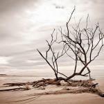 Flood driftwood - Tasmania